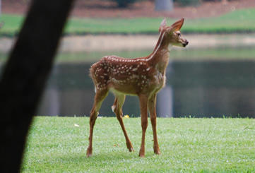 choose deer tolerant plants