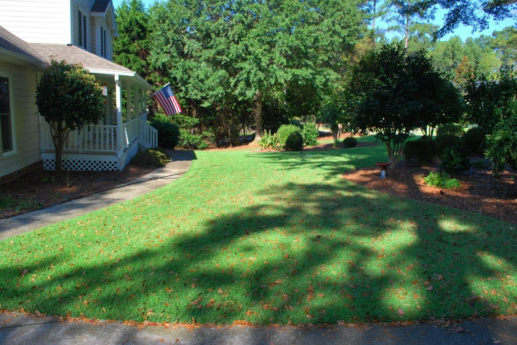 professional landscaping with sod installation