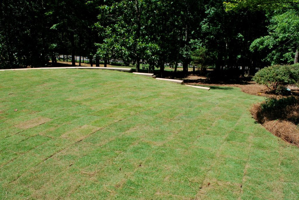 landscapers in fayetteville sodding large zoysia lawn