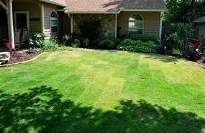 sod comes in different colors
