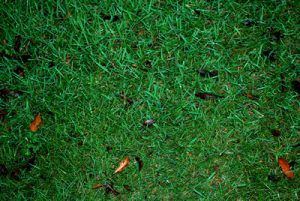 the types of zoysia side by side